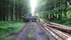 Wald Abfuhr